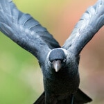 Hacker Systems Crow