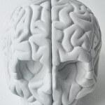 Well-read Wednesdays – Brain Rules by John Medina | Review