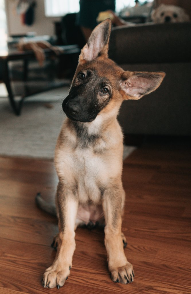 A cute dog tilting his head in confusion