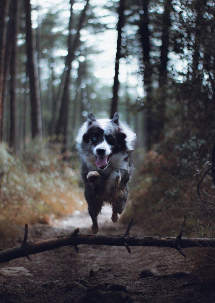 A dog running through the woods at the camera