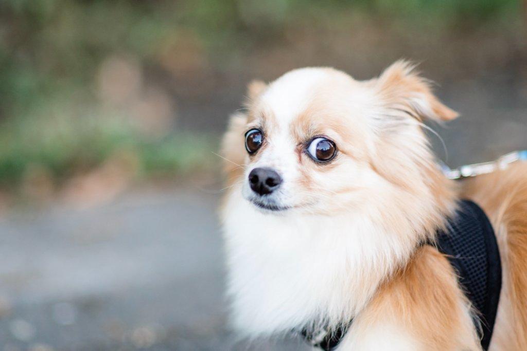 A skeptical dog